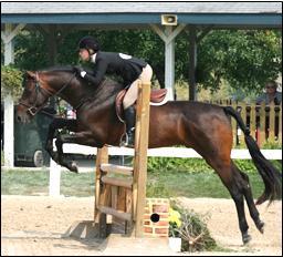 Horsemastership Jumper