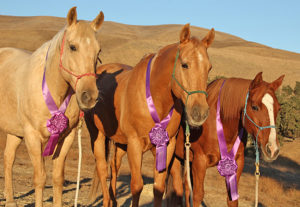 Region 5 Trail Trials Horses Astro, Dutch Boy, and Sunny - Winners All!